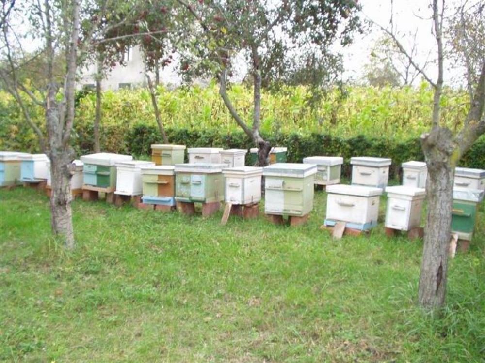 POVOLJNIJE SUBVENCIJE ZA PČELARSTVO
